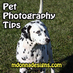 Pet Photography Tricks: How to Take Photos of Your Pet